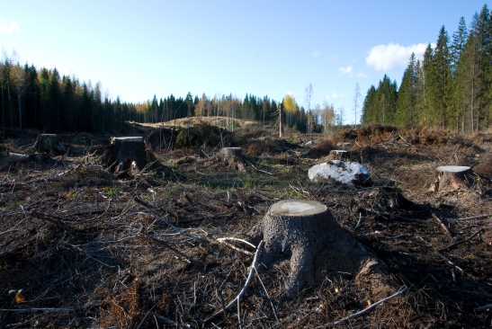 Clearcutting_in_Southern_Finland